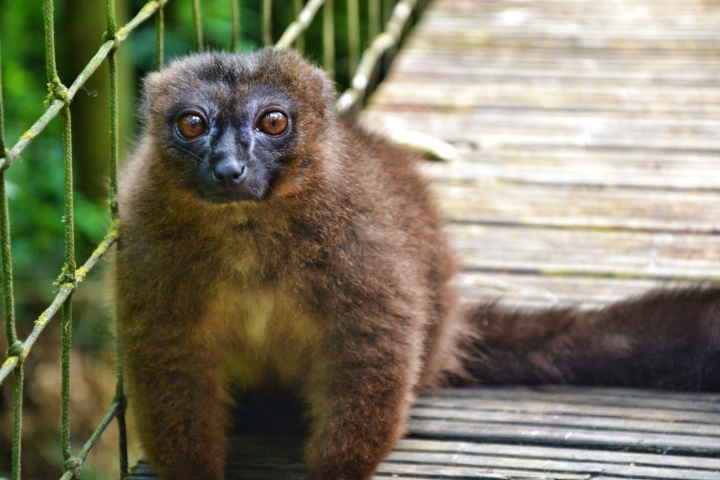 Dordogne – Réserve Zoologique deCalviac