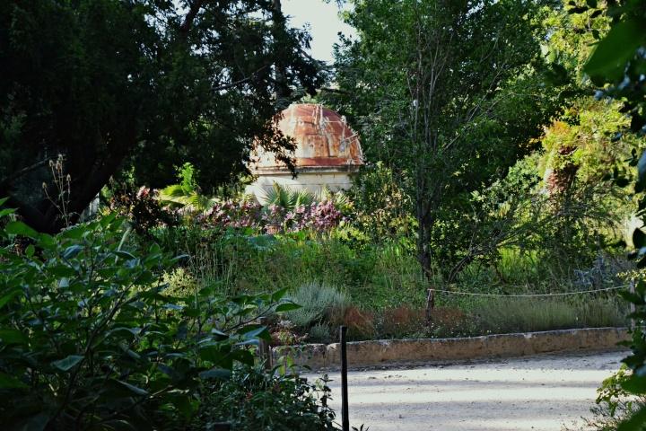 Hérault – Jardin des plantes deMontpellier.
